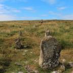 A Journey Through the Heart of Dartmoor