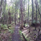 The Rakiura Track